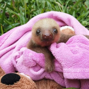 @cutee.sloths